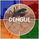 dengue22222.jpg