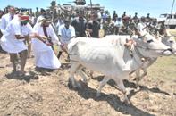 Basil Rajaparksa in Jaffna Paddy Field